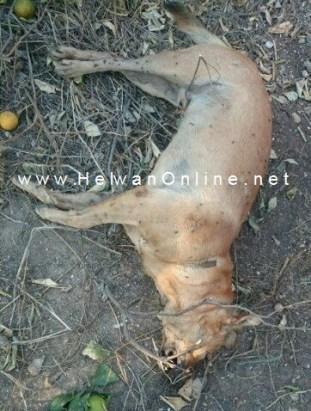 بعد إصابة 10 أشخاص بسبب كلب مسعور .. حي 15 مايو يقتله ويمشط المنطقة.