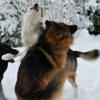 Det finns alltid några som gillar snö...