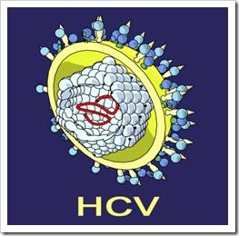 hcv_virus
