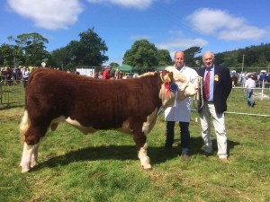 Horned Bull of the Year 2016 Corraback Jedi owned by Mervyn and Henry Richmond