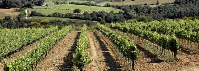 vinos-del-penedes-vinas