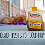 Choosing Dog Treats for your Pup 101
