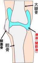 滑液 解剖
