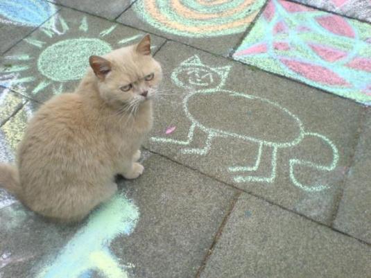 gato e desenho