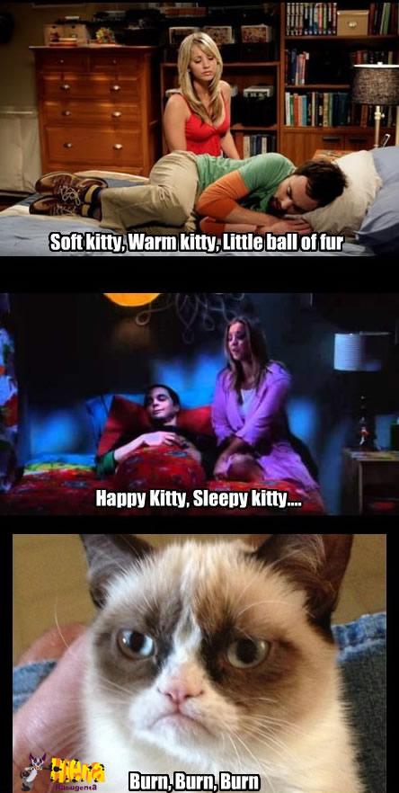 gato mau humorado