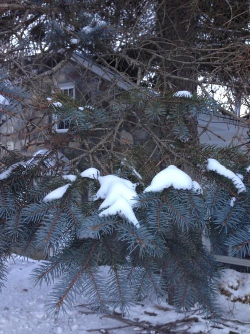 Medium Of Pine Tree Roots