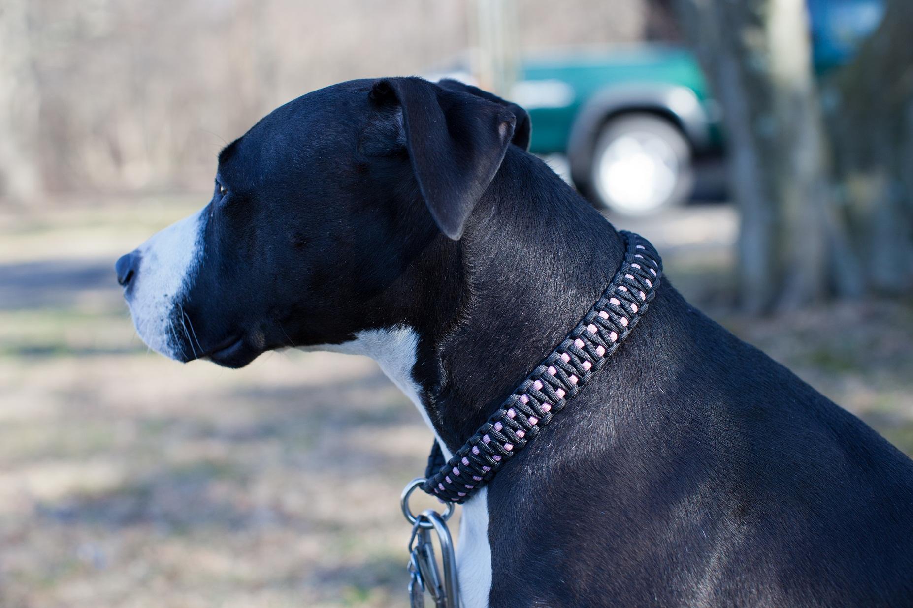 Fullsize Of Paracord Dog Collar