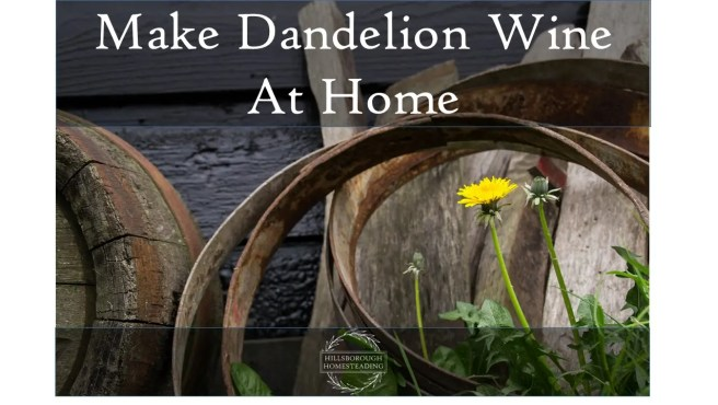 Make Dandelion Wine At Home