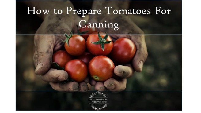 Preparing Tomatoes For Canning