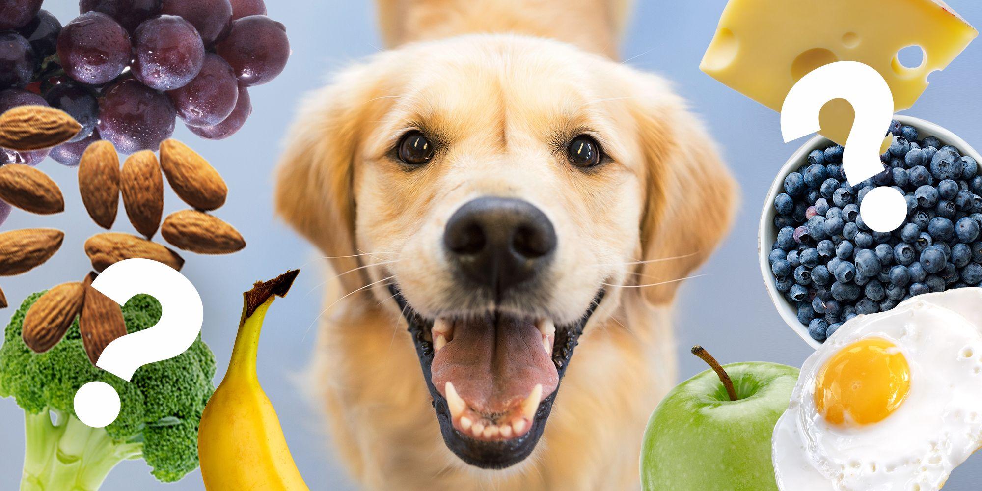Fullsize Of Is Avocado Good For Dogs