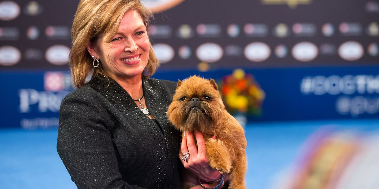 Hairy Newton Brussels Griffon Wins Show At National Dog Show At National Dog Show Dog Show Presented By Purina 2017 Newton Brussels Griffon Wins bark post Is It Fun To Be A Pet Named Steve