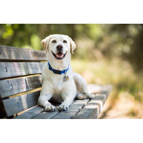 Medium Crop Of Mellow Dog Breeds