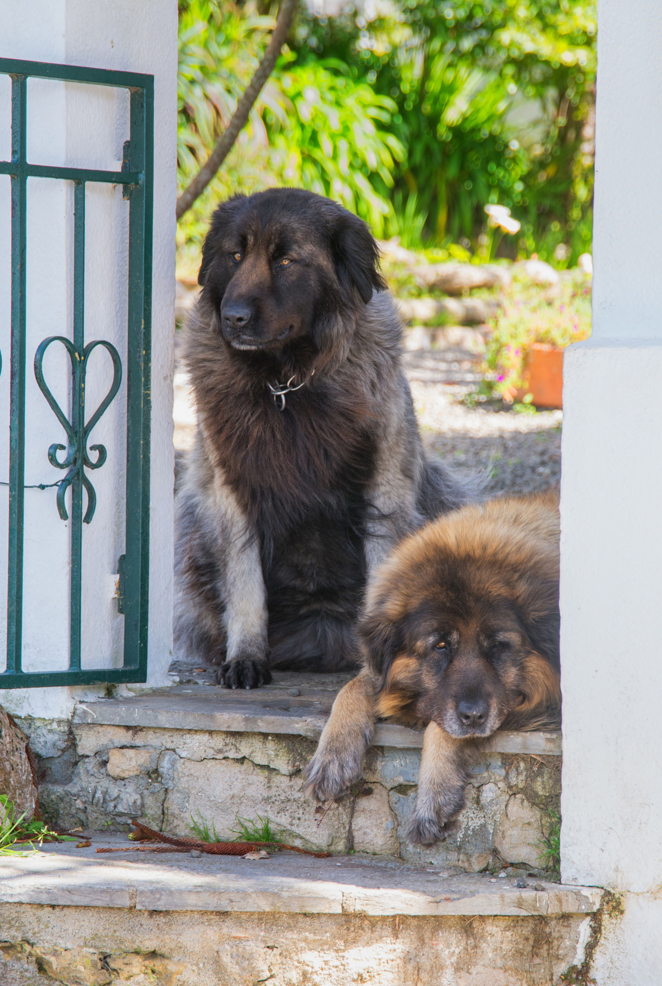 Fullsize Of Most Protective Dogs