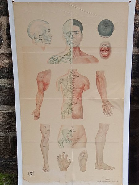 four vintage acupuncture chart showing all the body parts