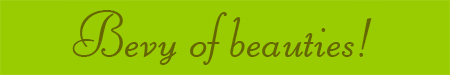 'Bevy of beauties!' blog post banner