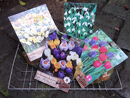 packs of spring bulbs