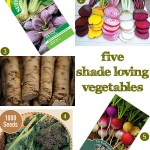 Gimme Five! Shade loving vegetables