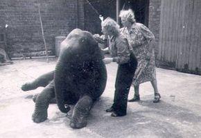 Olifant Sheila met Denise en haar moeder Irene (foto's: Belfast Zoo)