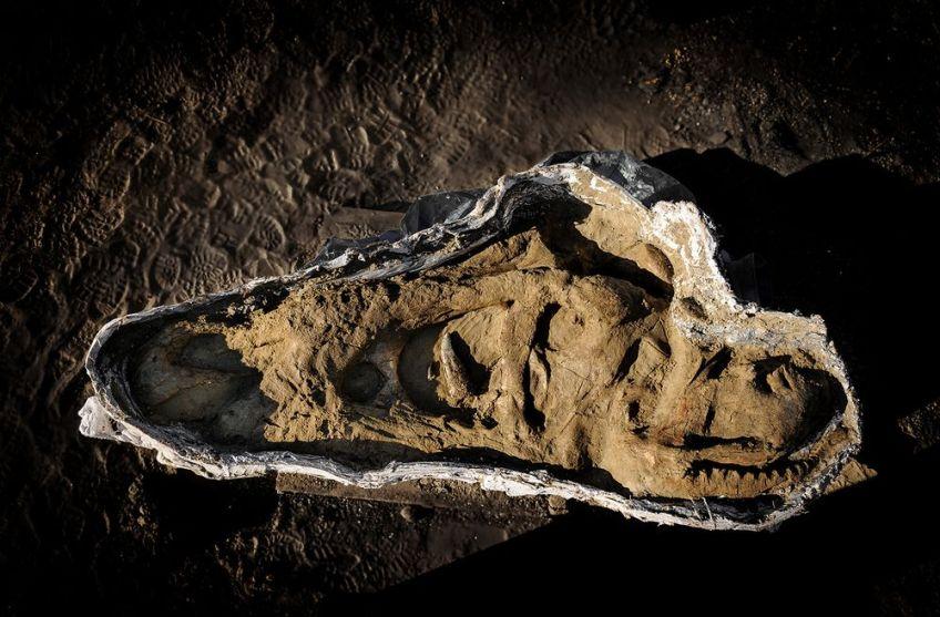 De schedel van de tyrannosaurus rex - Servaas Neijens, Naturalis