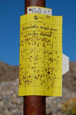 dsc_0178-peglegs-insect-trap-sign.jpg