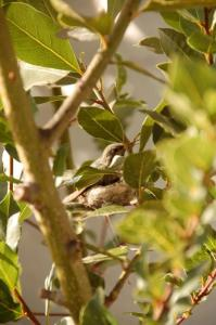 dsc_0217-our-hummingbird-nest.jpg