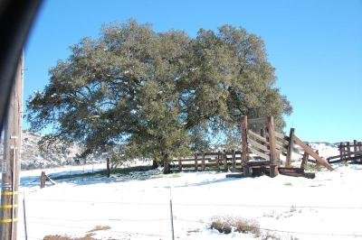 dsc_0001-santa-ysabel-winter-2011.jpg