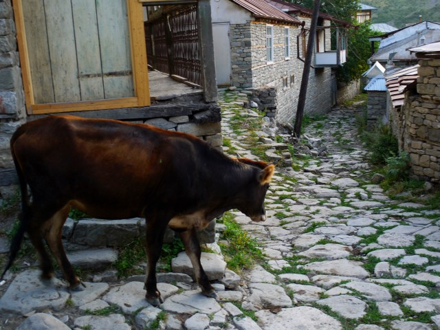 A cow walking the cobbled street of Lahıc - Lahıc, Azerbaijan, Hitch-hiking in Azerbaijan: advantages and disadvantages