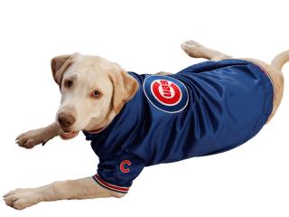 cubsdog