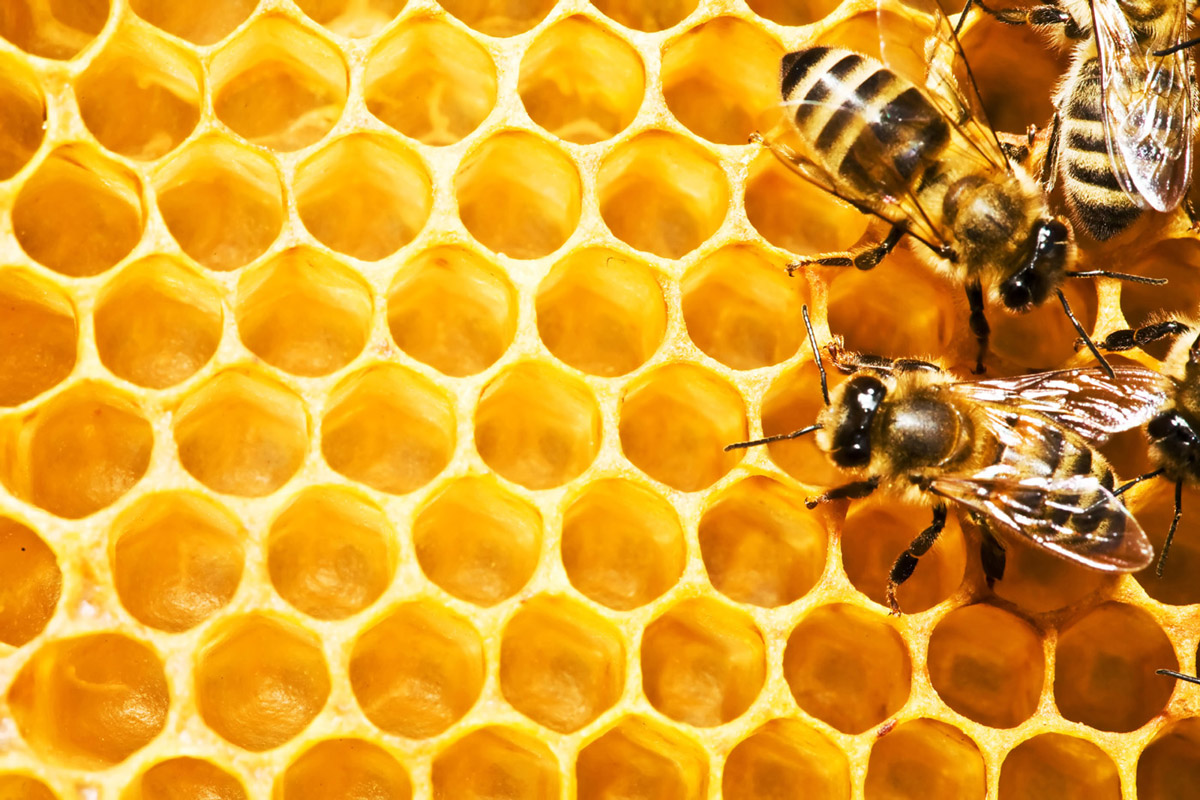 How to Build a Hive: Hive Waterloo Region Launch