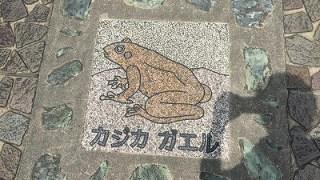 摂津峡にカエルを探しに行きました。