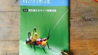 サシバ 保護活動 自然保護5,6月号