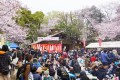 祭りの当日はあいにくの曇天でしたが、桜もきれいに咲いていて多くの人でにぎわっていました(2016年4月2日)