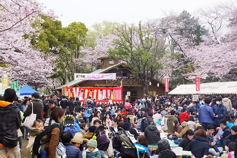 2017年の「綱島公園桜まつり」は4/1(土)、多数の模擬店と抽選会も