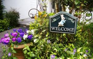 訪問者を出迎える日吉の万里村(まりむら)さん宅のピーターラビットの看板。クリスマスローズと紫のつゆ草が良いコンビを組み彩りを加える