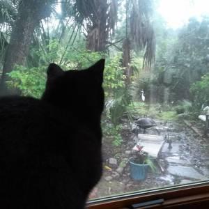 Cat hunting bird hunting fish! marshliving byrnesdowns egret