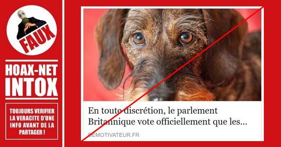 Non, une loi en Grande-Bretagne sur la non sensibilité des animaux n