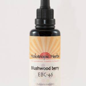 Blushwood berry tincture 50 ml, Hylandia dockrilli, All Natural Tincture, Herb tincture, Herbal Tincture, Herbal Extract, Miron Violet Glass