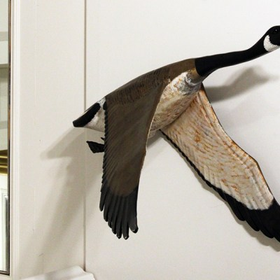 Canadian Goose #2
