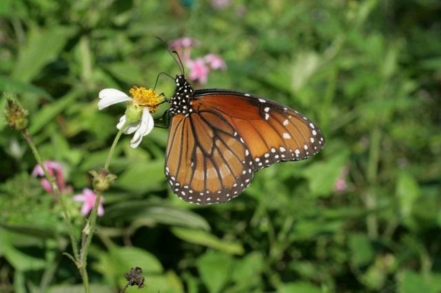 fort lauderdale butterflies
