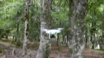 Volando entre árboles con un dron