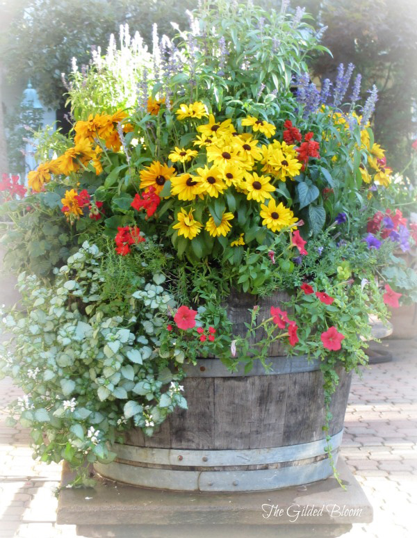 8 stunning container gardening ideas home and garden for Container garden ideas