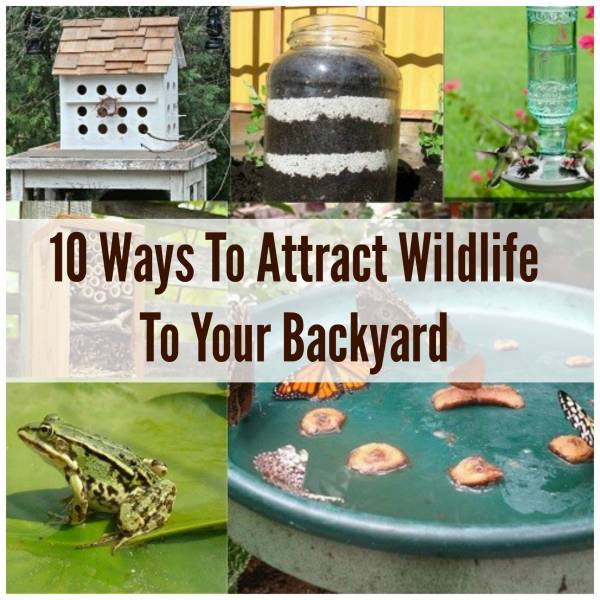 how to attract wildlife to your backyard k k club 2017