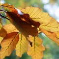 fallcolors9