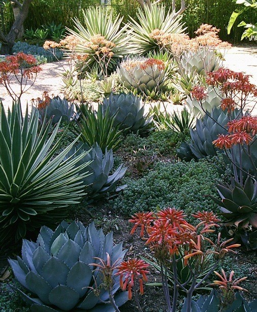 Xeriscaping Drought Tolerant Land Cover Home Decor Designs