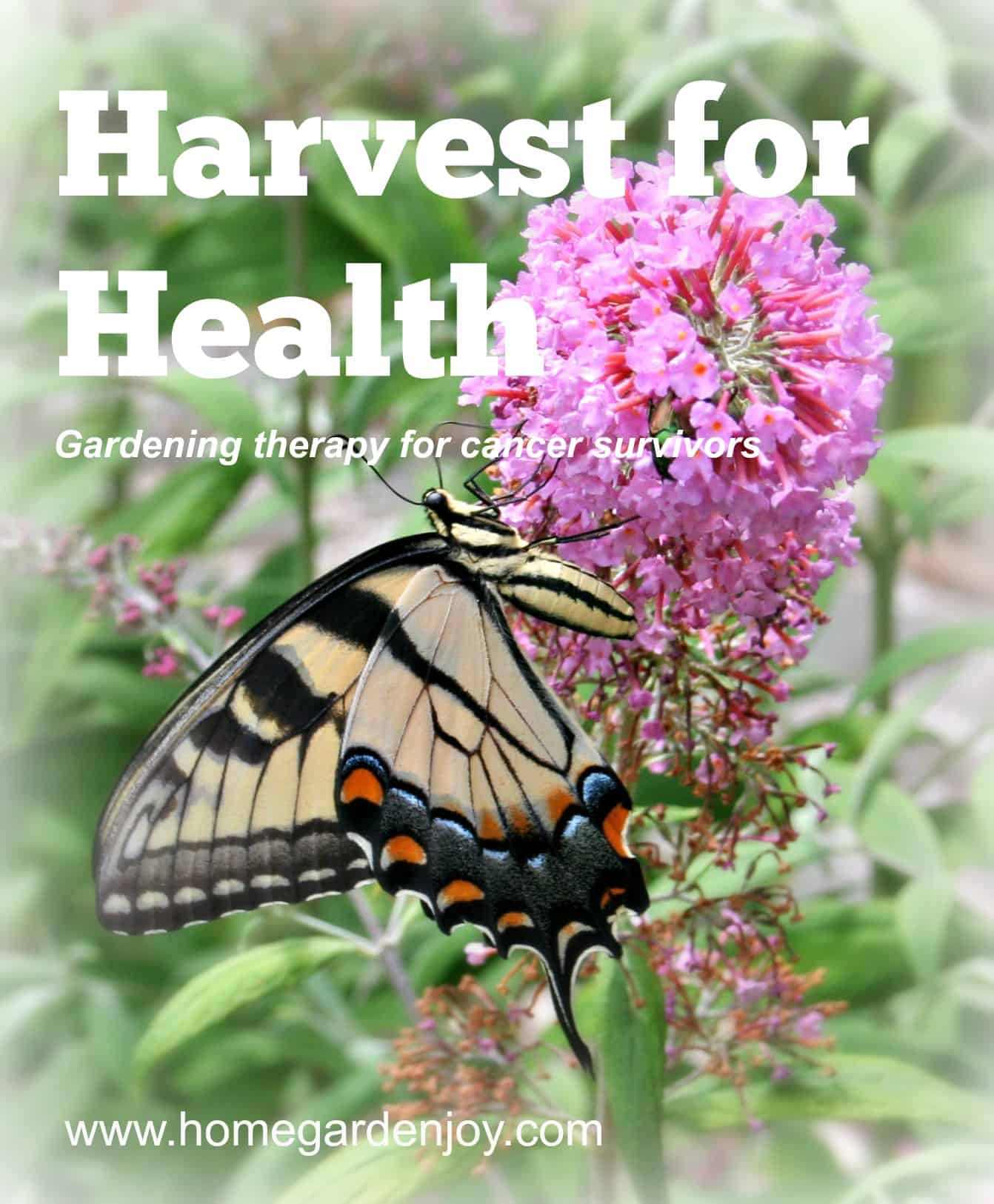 Harvest for Health Uses Gardening as Therapy