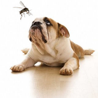 Natural Mosquito Repellent for Dogs – Safe for Pets