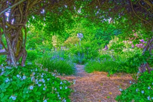 Medium Of Natural Fairy Garden
