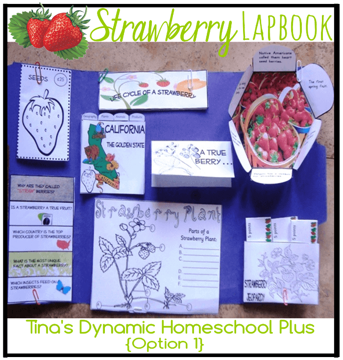 strawberry home schooled motion