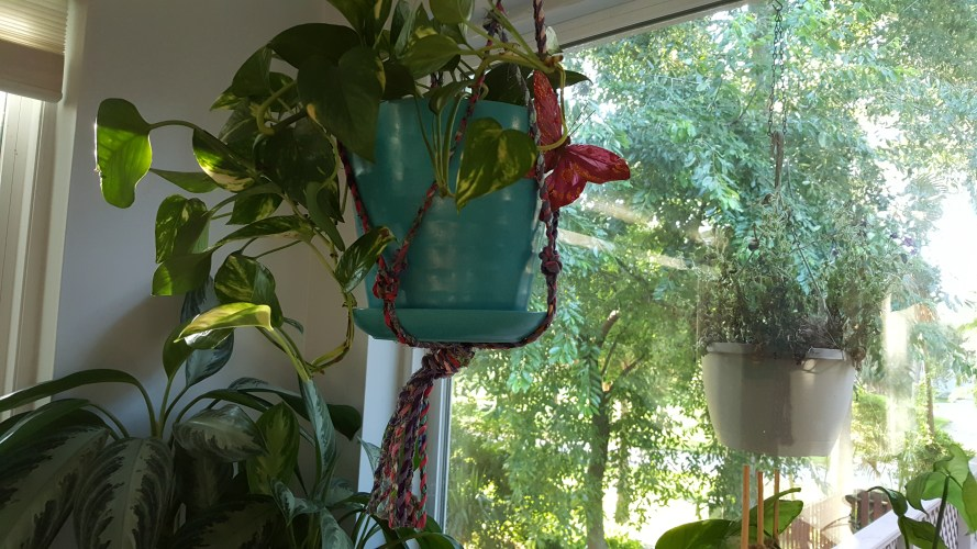 plant hanger 13
