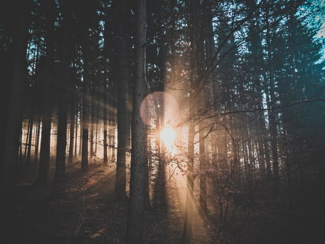 bossfight-free-stock-photos-sun-sunrise-sunset-trees-forest (1)